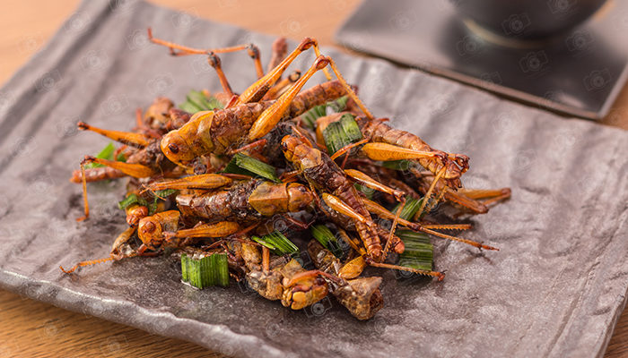 Grasshopper insect crispy with pandan