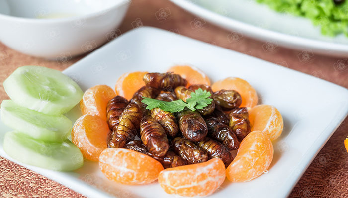 Wood worm fried insect and orange on white plate