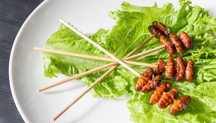Wood worm fried insect and Salad leaf