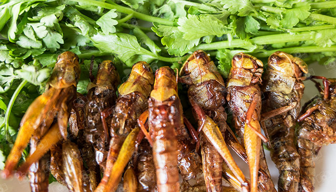Grasshopper fried insect and Salad leaf
